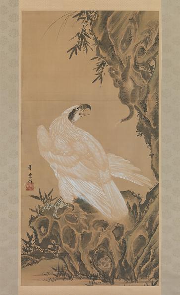 Beak「White Eagle Eyeing A Mountain Lion」:写真・画像(3)[壁紙.com]