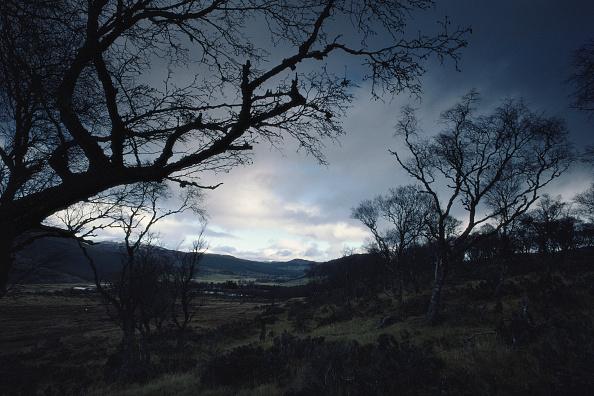 Dark「Brooding View」:写真・画像(17)[壁紙.com]