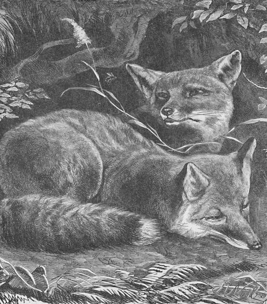The Fox At Home Circa 1900:ニュース(壁紙.com)