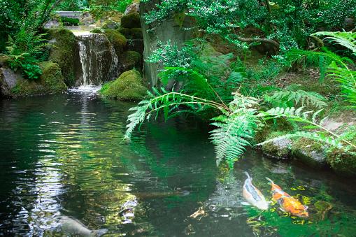 Carp「Waterfall gently runs into Japanese Zen garden koi pond」:スマホ壁紙(15)