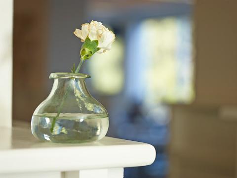 カーネーション「Flower in vase」:スマホ壁紙(4)