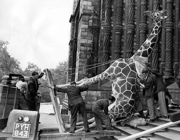 Giraffe「Mind My Feet」:写真・画像(11)[壁紙.com]