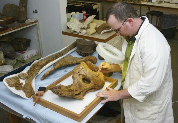 Paleontologist「Palaeontologists Un-Earth Dinosour Bones In Queensland」:写真・画像(7)[壁紙.com]