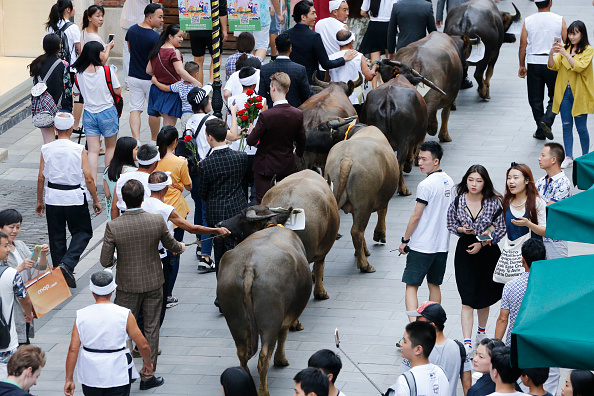 七夕「Hauling Cows To Woo Love During Traditional Qixi Festival」:写真・画像(16)[壁紙.com]