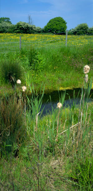 Nature wildlife reserve, Gloucestershire, England, UK:ニュース(壁紙.com)