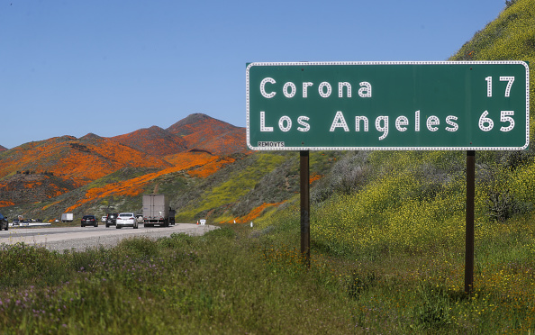 Hill「Wet Winter Weather Brings 'Super Bloom' Of Wildflowers To California」:写真・画像(5)[壁紙.com]