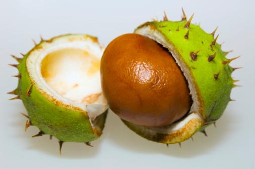 Chestnut Tree「Chestnut and conker, close-up」:スマホ壁紙(4)