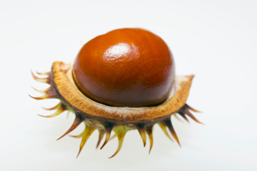 Chestnut「Chestnut and conker, close-up」:スマホ壁紙(19)