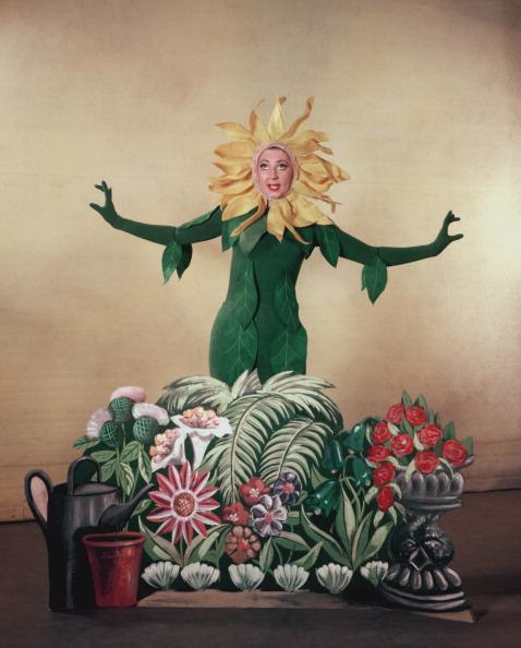 ひまわり「Fraser As Sunflower」:写真・画像(17)[壁紙.com]