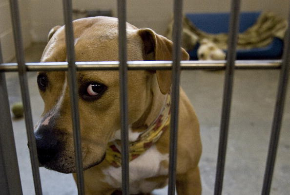 Dog「Household Pets Become Latest Victims Of Foreclosure Crisis」:写真・画像(18)[壁紙.com]
