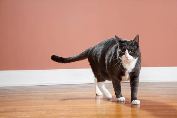 Walking Cat:スマホ壁紙(壁紙.com)