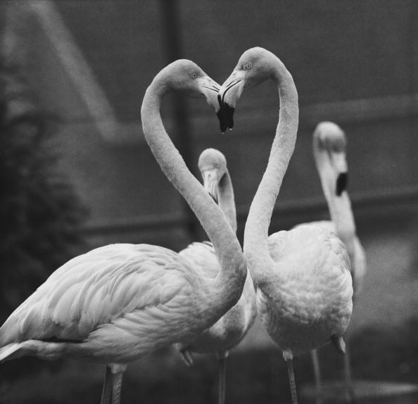 Romanticism「Necking Flamingoes」:写真・画像(8)[壁紙.com]
