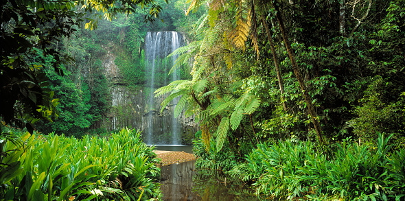 Queensland「Millaa Millaa Falls」:スマホ壁紙(19)