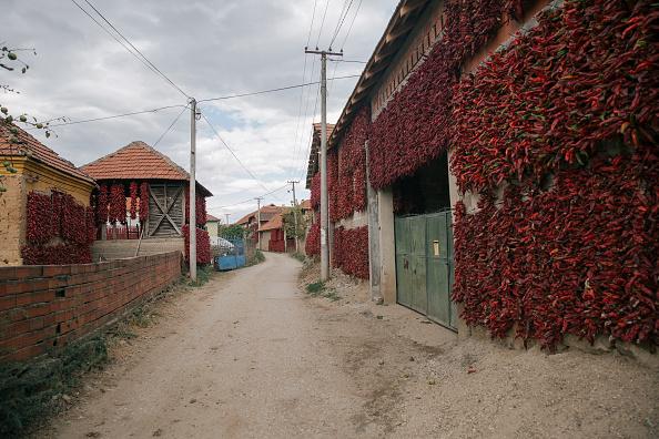 Vladimir Zivojinovic「Serbia's Red Gold: Pepper Harvest」:写真・画像(12)[壁紙.com]