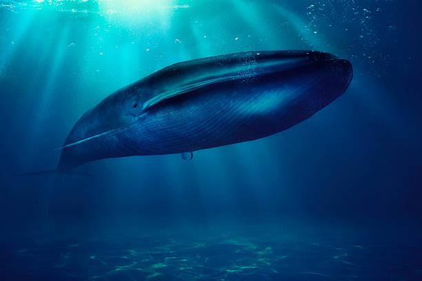 シロナガスクジラ、海、動物:スマホ壁紙(壁紙.com)