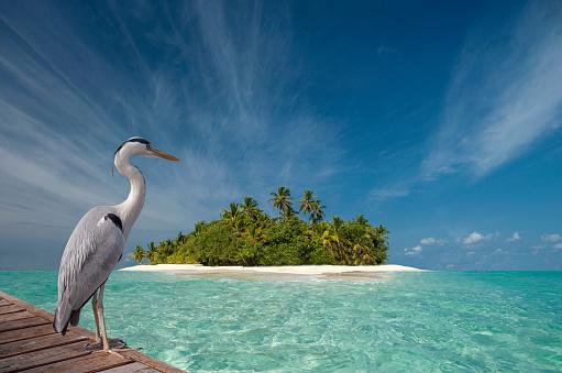 Indian Ocean「Stork standing on wooden dock near tropical island」:スマホ壁紙(11)