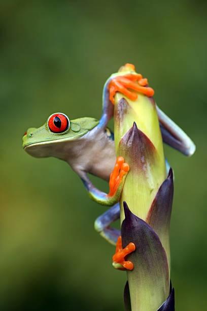 A frog clinging onto a stem leaf:スマホ壁紙(壁紙.com)
