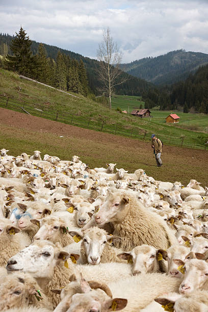 Tatra, Slovakia:ニュース(壁紙.com)
