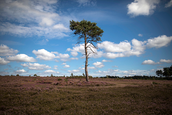 England「Heather Blooms On Thursley Common」:写真・画像(13)[壁紙.com]