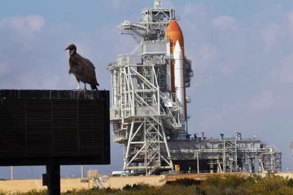 Taking Off - Activity「NASA Prepares For Launch Of Space Shuttle Dsicovery」:写真・画像(15)[壁紙.com]