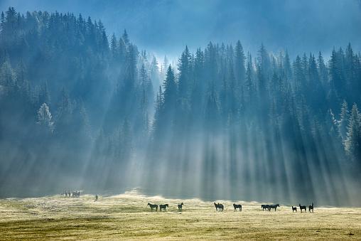 胸を打つ「Horses in meadow」:スマホ壁紙(1)