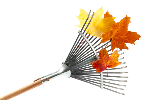 Silver Colored「Silver rake with wooden handle and orange leaves on it」:スマホ壁紙(2)