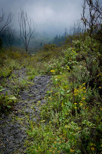 Democratic Republic of the Congo「Mount Nyiragongo Volcano, Kibati, Virunga National Park, Parq National des Virunga, Democratic Republic of Congo」:スマホ壁紙(18)