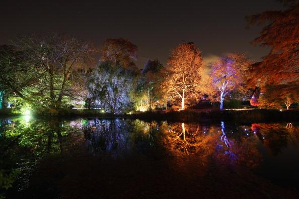 Oli Scarff「Enchanted Woodland at Syon Park」:写真・画像(16)[壁紙.com]