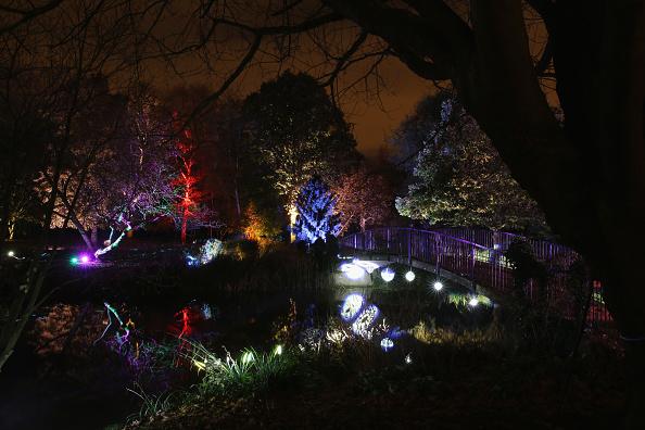 Oli Scarff「Enchanted Woodland at Syon Park」:写真・画像(14)[壁紙.com]