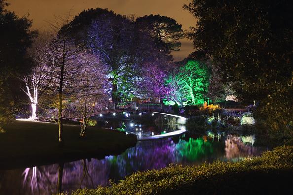 Oli Scarff「Enchanted Woodland at Syon Park」:写真・画像(18)[壁紙.com]