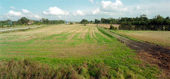 Grass Family「Route of the Channel Tunnel Rail Link. Shepway, Kent, United Kingdom.」:写真・画像(3)[壁紙.com]