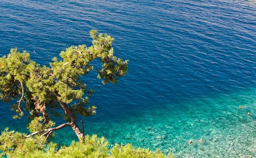 Aegean Sea「Tree and Aegean Sea」:スマホ壁紙(0)