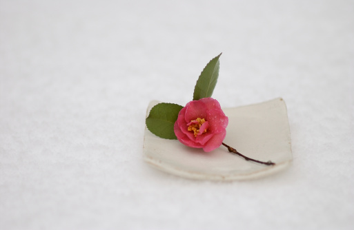 Wabi Sabi「Single camellia on a plate」:スマホ壁紙(2)