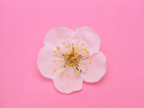 梅の花「Plum tree flower」:スマホ壁紙(5)