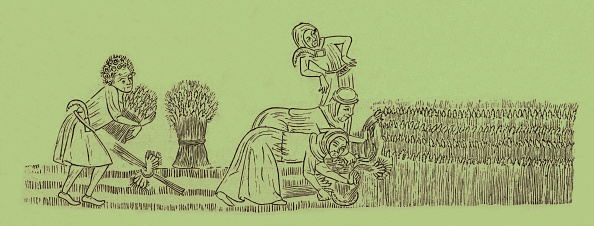 Circa 14th Century「Peasants reaping the corn」:写真・画像(13)[壁紙.com]