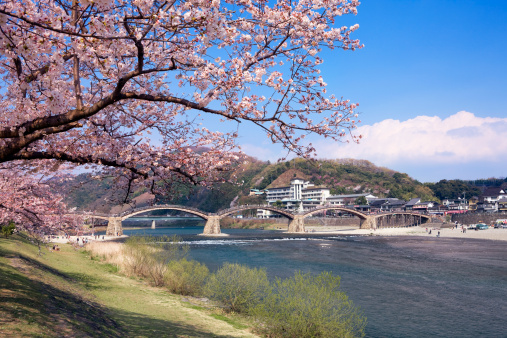 桜「Kintai bridge and cherry blossoms, Yamaguchi Prefecture, Honshu, Japan」:スマホ壁紙(17)
