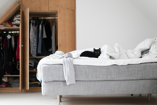 black cat「Black cat lying on unmade bed at home」:スマホ壁紙(16)