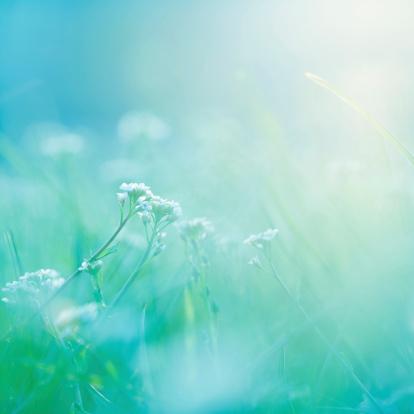 花畑「朝ます。」:スマホ壁紙(3)