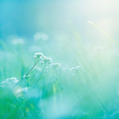 Wildflower「Morning.」:スマホ壁紙(0)