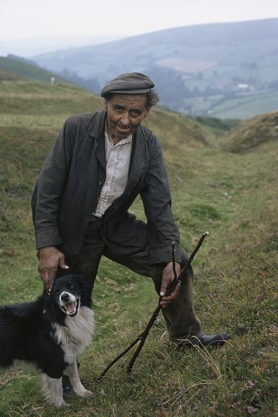 Working Animal「Canine Companion」:写真・画像(17)[壁紙.com]