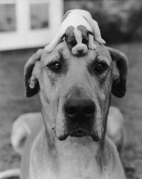 Puppy Love:ニュース(壁紙.com)