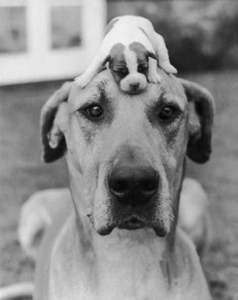 Cute「Puppy Love」:写真・画像(2)[壁紙.com]