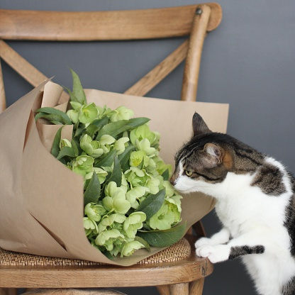 Three Quarter Length「Cat sniffing bunch of flowers lying on a chair」:スマホ壁紙(15)