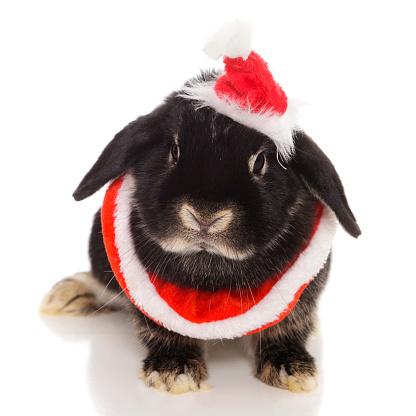 Santa Hat「Santa Bunny」:スマホ壁紙(10)