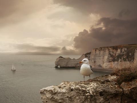 Albatross「Sea landscape with stone bridge, ships and seagull」:スマホ壁紙(6)
