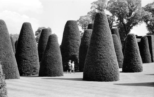 Ornamental Garden「Yew Garden, Packwood House, Lapwood, Warwickshire, 1945-1980. Artist: Eric de Maré」:写真・画像(9)[壁紙.com]