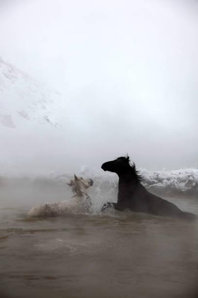 Horses in water:スマホ壁紙(壁紙.com)