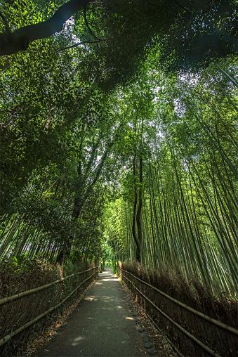 里山「Arashiyama Bamboo Grove, Kyoto, Japan」:スマホ壁紙(6)