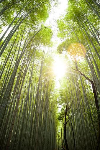 Arashiyama「Arashiyama Bamboo Forest in Kyoto, Japan」:スマホ壁紙(8)