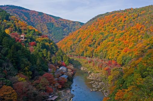 秋+京都「Arashiyama in Autumn, Kyoto Prefecture, Honshu, Japan」:スマホ壁紙(1)